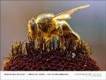 ' am 03.07.2013 - More-than-Honey-01.jpg